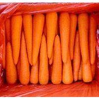 Fresh Carrot  Carrot thumbnail image