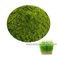 Manufacture Organic Wheat Grass Powder, Wheat grass juice Powder, Wheat Grass Powder, Wheat Extract