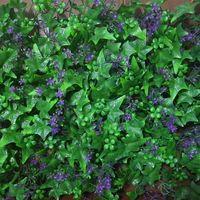 vertical garden for wall greening