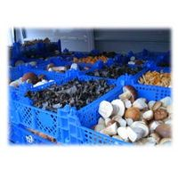 sell fresh,frozen,dried mushrooms,wild berries best prices high quality,gourmet taste and flavour. thumbnail image