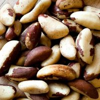 Brazil Nuts Natural Grade / Top Quality Brazil Nuts for Sale / We also have Paradise Nut