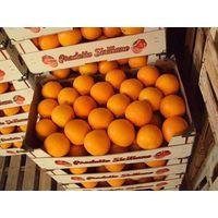 Tarocco fresh red pulp orange