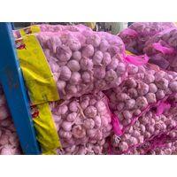 umei garlic thumbnail image