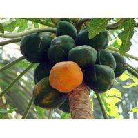 Fresh Papaya thumbnail image