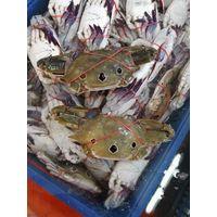 Frozen three sport crab