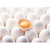 Egg yolk lecithin