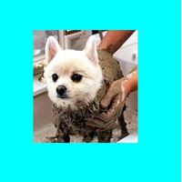 Pets Therapy Dead Sea Black Mud Mask thumbnail image