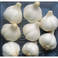 The Chinese supplier of fresh garlic thumbnail image