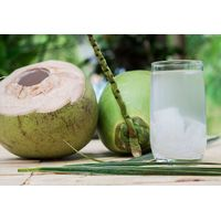 Global Gap Tropical Fresh Fruits From Vietnam - Fresh Young Coconut Fruit thumbnail image