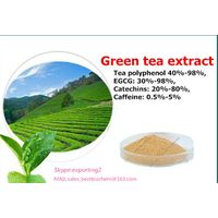 High quality Green tea extract powder