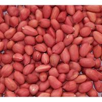 Raw Peanut Kernels (dried) thumbnail image