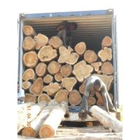 A grade bilinga wood logs for sale.