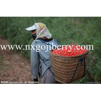Dried Goji Berry Supply380 thumbnail image