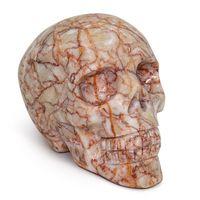 Common Skulls