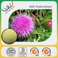 China manufacturer supply high quality milk thistle extract silymarin