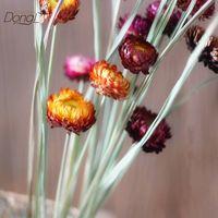 Wholesale chrysanthemum plants dried flowers thumbnail image