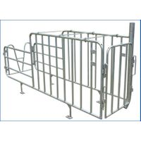Pig farming equipment for gestated pig