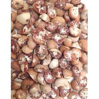 Betel Nuts/Areca Nuts Split
