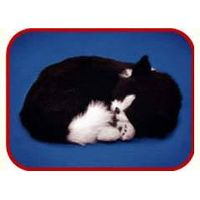 fur animal toy, sleeping pets, sleeping dog, sleeping cat, Realistic Looking Puppy thumbnail image