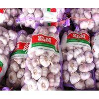 white fresh garlic thumbnail image