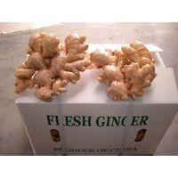 300g fresh ginger thumbnail image