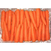 High Quality Fresh Carrots from China