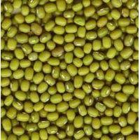 Beans,Green mung beans