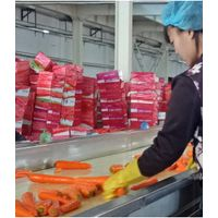 Chinese vegetable fresh carrots supplier and exporter