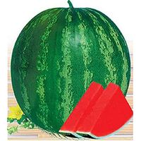W06 Quanxin big size seedless watermelon seeds hybrid, watermelon seeds for planting thumbnail image