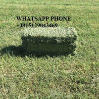 Alfalfa Hay good grade