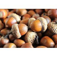 Acorn thumbnail image