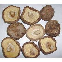 mushrooms thumbnail image