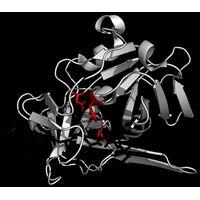 TEV protease