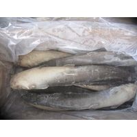 Good Quality Frozen Catfish All Size Available