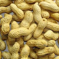 Roasted Peanuts in shell thumbnail image