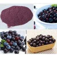 Acai Berry Extract 5%-70%Anthocyanin/acai berry extract