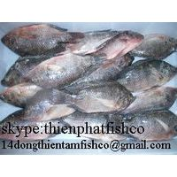 we supply black tilapia with good price