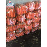 Carrot From Vietnam (0084 905 179759)
