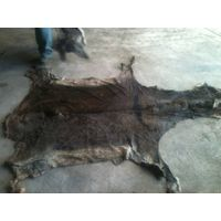 Wet Salted Donkey Hide for sale