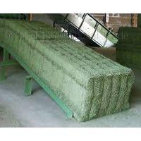 animal feeding stuff Alfalfa /horse alfalfa /alfalfa and timothy hay / alfalfa sprout seeds