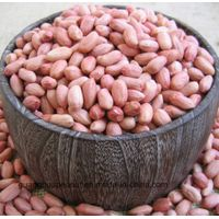 Raw Ground Nuts,Peanuts