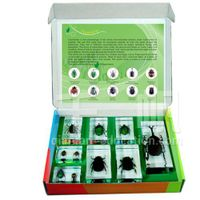 1716 Qianfan Chafers Embedded Specimen Teaching Material for Biology