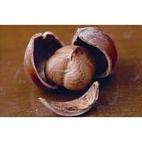 Hazelnut  In-shell