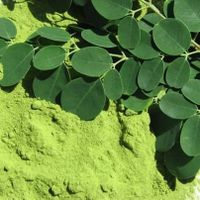 Moringa Oleifera fresh, dried  leaves