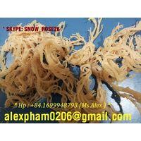 Eucheuma Cottonii Seaweed / Kappaphycus Alvarezii, Irish moss