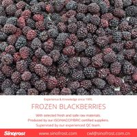 IQF Blackberries/Frozen Blackberries/IQF Blackberry/Frozen Blackberry