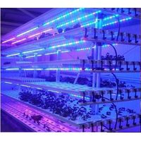 QT-LED1218 Plant Fill Light Lamp