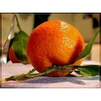 Mandarin Orange, Citrus fruit from Pakistan