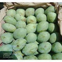Mango - HS Code 0804.50.20 thumbnail image