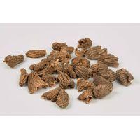Dried Morels (Verpa Bohemica)